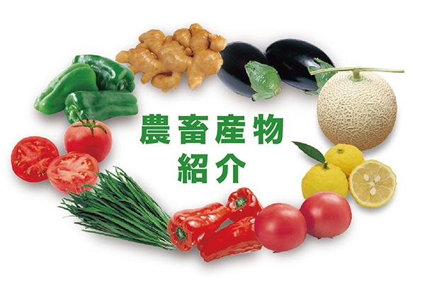 高知県の農畜産物紹介